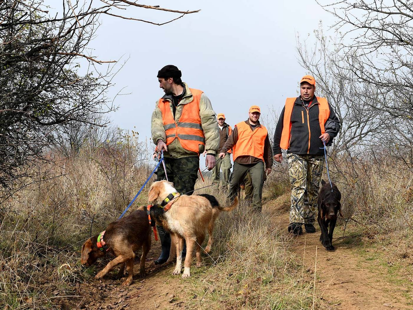 Driven Hunt with dogs
